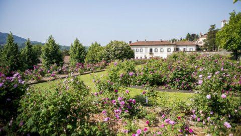 Rose di Maggio a Villa Bozzolo