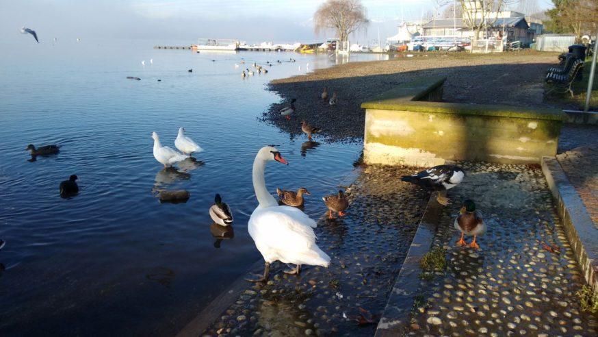 Una gita sul Lago di Varese