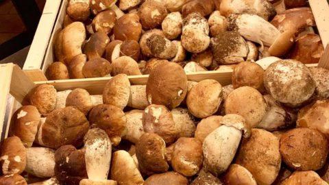 Premiata Gnoccheria Risotteria: menu Porcini